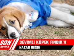 Sevimli Köpek Fındık'a Nazar Değdi